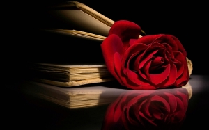 Red-Red-Rose-roses-11662034-1280-800