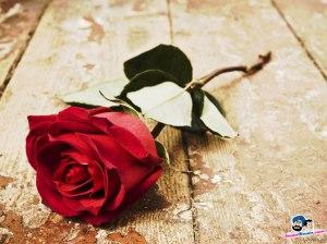 roses-31v